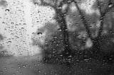 rain window 3 h.jpg
