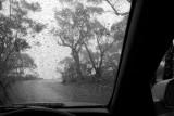 rain wndow 2 h.jpg