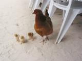 Residents at Beachside restaurant 247.JPG