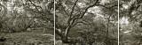 Sprawling Tree