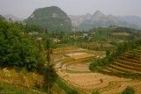 Bac Ha. Rice fields