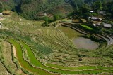 CIRCLED RICE FIELDS - CAT CAT.
