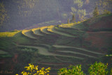 SAPA : SUNSET LIGHT ON RICE TERRACES