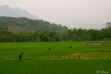 RICE FIELDS - CAO BANG PROVINCE
