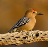 AZ. Birds & Critter's 2011