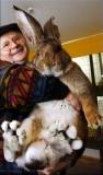 Herman Giant Rabbit.jpg