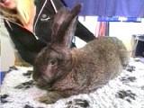 Roberto The Biggest Bunny.jpg
