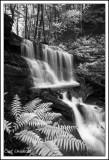 Bear Run Falls 3 in Black & White