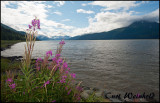 Fireweed  and Cook Inlet
