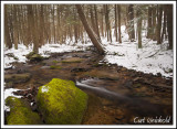 Snow & Moss