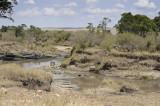 Stream Crossing with Zebra
