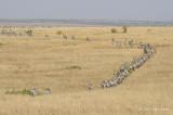 Plains with Zebra