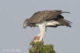 Eagle, Martial