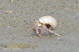 Land Hermit Crab @ Changi