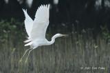 Egret, Chinese @ Laem Phak Bia