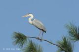 Heron, Grey @ Japanese Gardens