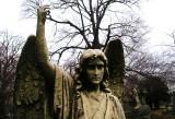 Angel at Woodlawn