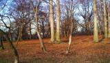 Kissena forest