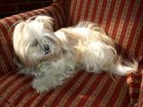 Yuji in repose