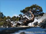 OK_20111119_7295-web500.JPG
