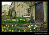 Daffodils, Snowshill