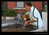 Thirsty Doggy, Lake Garda, Lombardy, Italy