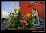 Flowers at Lady's Lodge, Portmeirion 2012