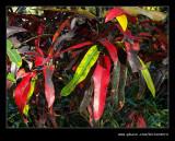 Botanic Garden #04, Durban, KZN, South Africa