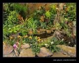 Botanic Garden #15, Durban, KZN, South Africa