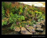 Botanic Garden #16, Durban, KZN, South Africa