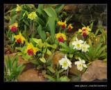 Botanic Garden #17, Durban, KZN, South Africa