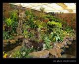 Botanic Garden #18, Durban, KZN, South Africa