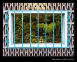 Botanic Garden #21, Durban, KZN, South Africa