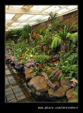 Botanic Garden #22, Durban, KZN, South Africa