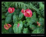 Makaranga Garden #01, Kloof, KZN, South Africa