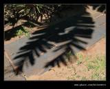 Muckleneuk #06, Durban, KZN, South Africa