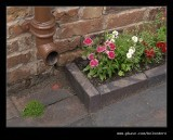 Tilted Cottage Flowers #2, Black Country Museum