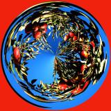 Julian Apple Tree Circle