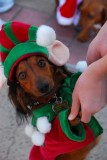 Elf Doxie
