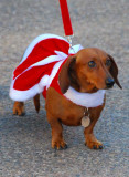 Mrs. Santa Doxie