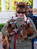 All the Way from Arizona - Holywood Star Doxies