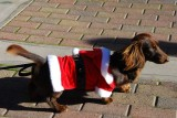 Super Santa Coat Doxie