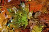Textures d'automne / Autumn textures P.Brunet