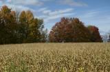 PB_DSC0151_Autumn's_country_side:L'automne_a_la_Campagne_Estrie_Quebec.jpg
