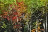 PB_T0536_Autumn_close-up:Close-up_d'automne_Laurentides_Quebec.jpg