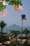 Krabi. Ao Nang Flowers