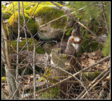 Egern.jpg