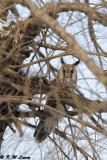 Owl DSC_8499