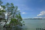 Pulau Ubin DSC_8223