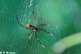 Spider DSC_2205